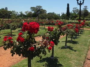Rose Garden in Palermo